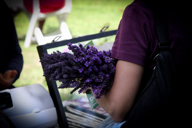 Armload of lavender